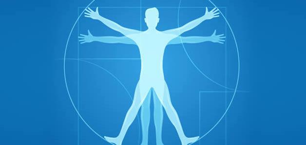 اعضای بدن انسان به انگلیسی